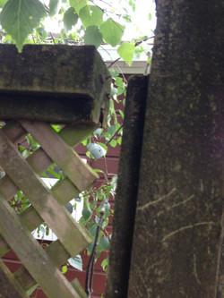 Storm damaged fence