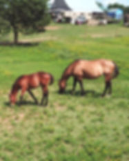 Mother and Foal_edited.jpg