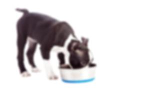 Puppy Drinking