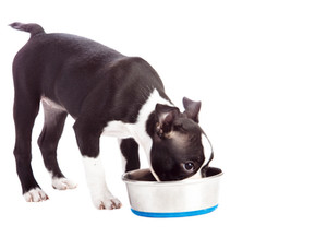 Is canned food killing your dog?