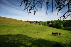 Hoeve landschap ezels internet