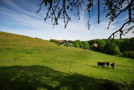 Hoeve landschap ezels internet.jpg