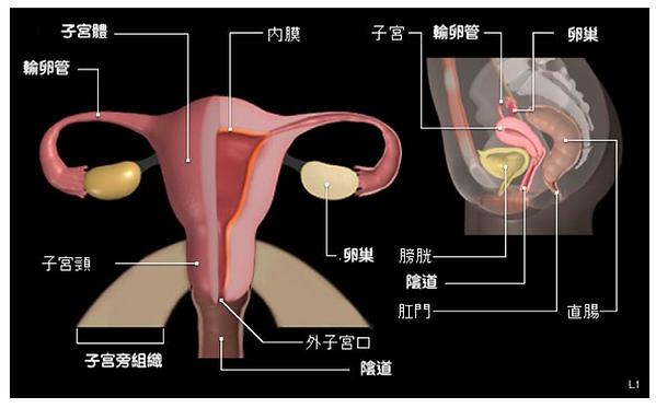 cervical1.png
