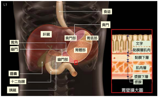 gastric1.png