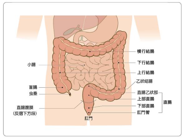 colon1.png