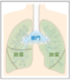 lungcancer1.png