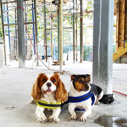 Client's pups hanging in their future kitchen #dannysorogon