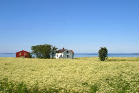 Åpnet landskap Alf Oxem.tif