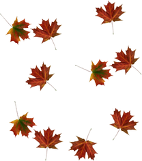 falling-leaves-transparent-png-32634.png