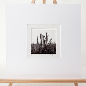 Titre : Cactus - N° 02/10