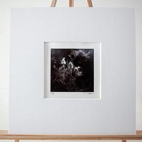 Titre : Les chardons - N° 01/30