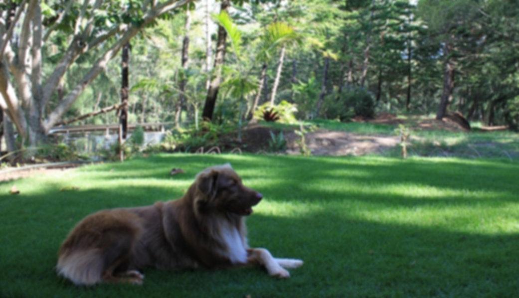Maui Dog Boarding Kennel