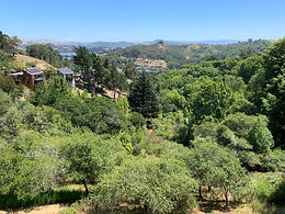 418 Durant Way, Mill Valley
