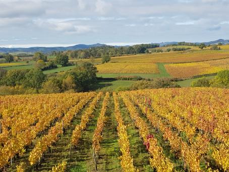 La vinification de nos Crus Beaujolais