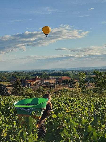 montgolfière au dessus des vignes pendant les vendanges