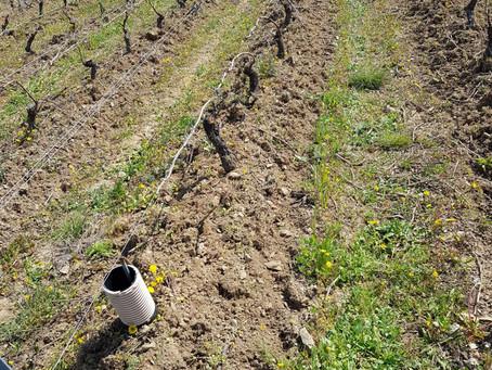 Le désherbage mécanique du sol