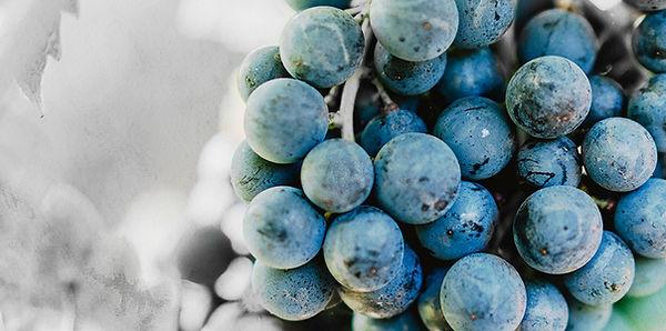 raisins du château de La Tessonnière