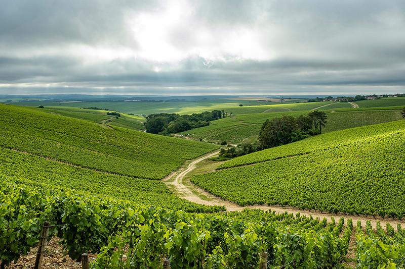 vue des vignes de Chablis