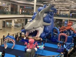 Tubarão gigante invade Campo Grande