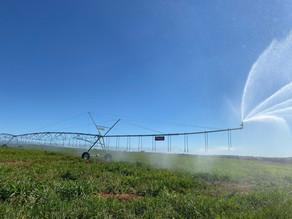 Irrigação começa a transformar solos arenosos em paisagens verdes
