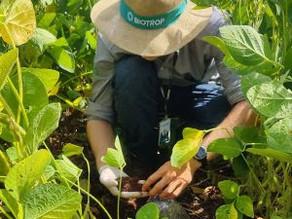 Projeto inédito para análise da biologia do solo tem início no Brasil