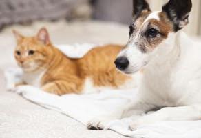 Microchip em pets: vale a pena implantar?