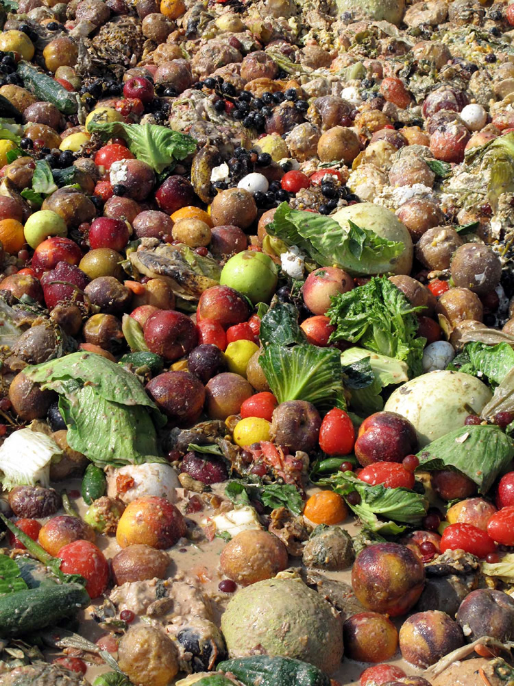 Why waste Food, we can store it!