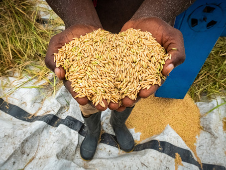 Africa races to fix its food systems by 2030