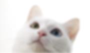 ホリスティック・電話相談・猫