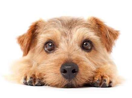 獣医ホリスティック医療・犬