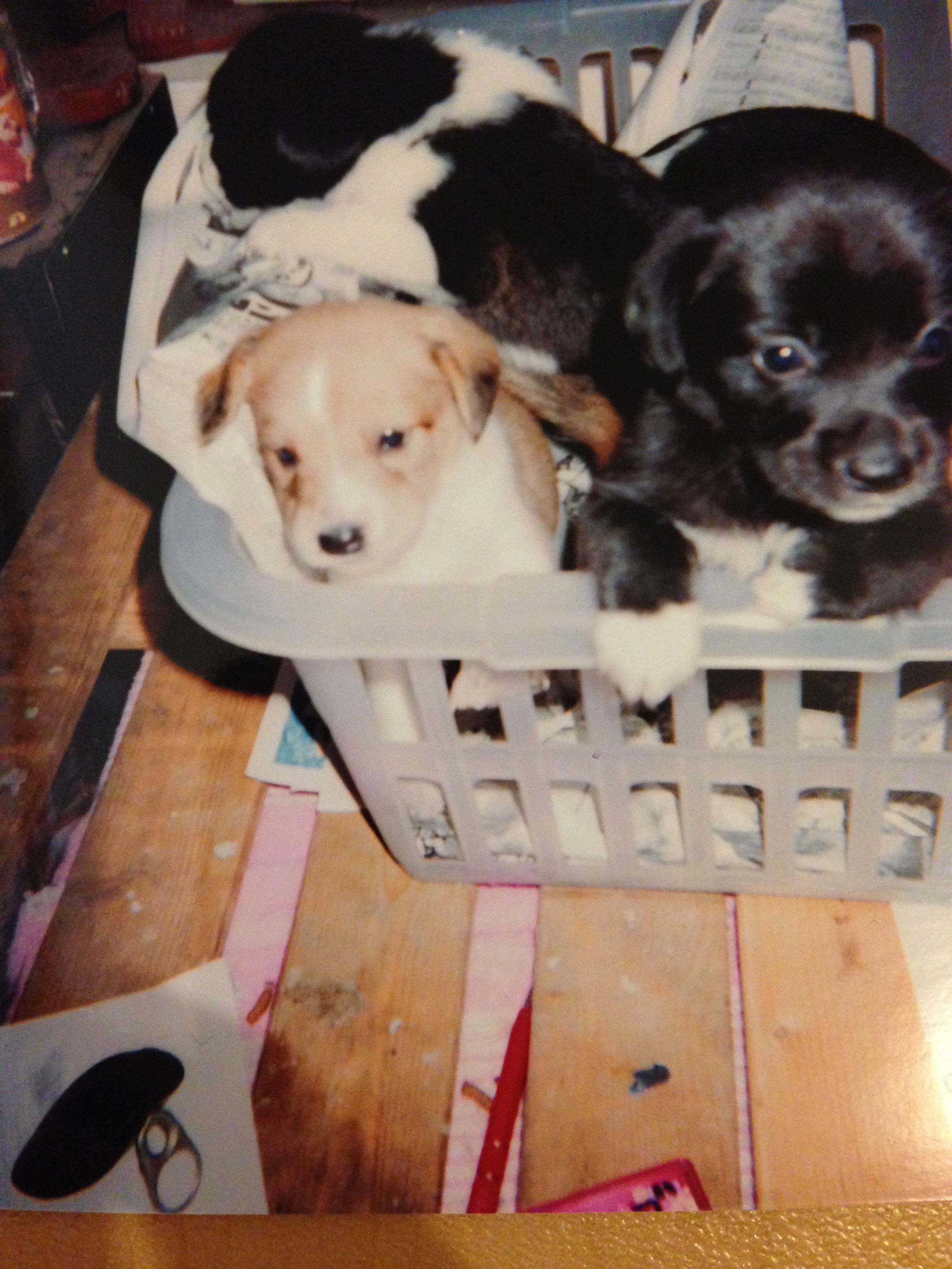大学時代:子犬を育てていました