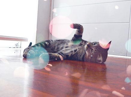 獣医ホリスティック医療・猫・Q&A