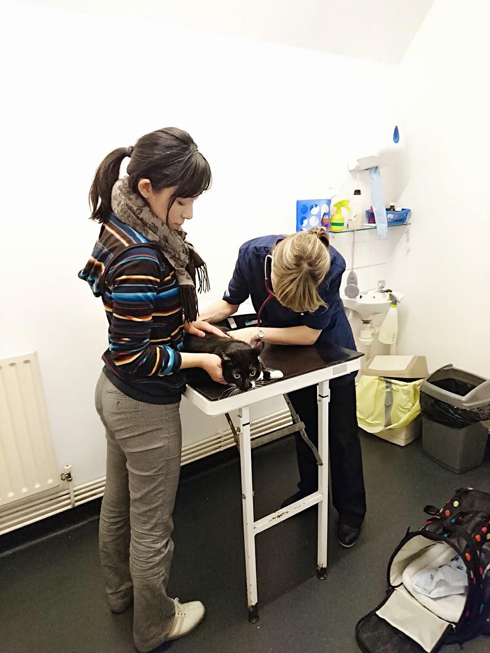 英国動物病院の診察