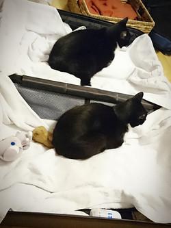 当院猫たち:出張前の様子