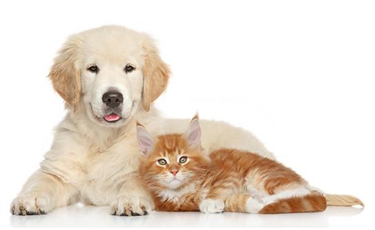 犬・猫・小動物の相談・獣医・ホリスティック医療