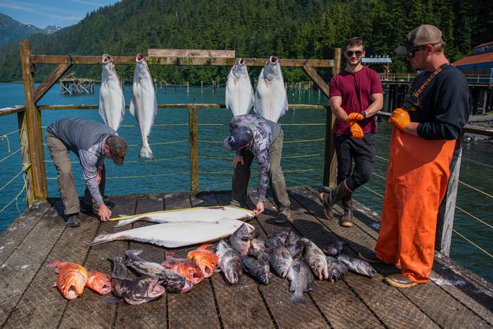 Sport fishermen measure their halibuts t