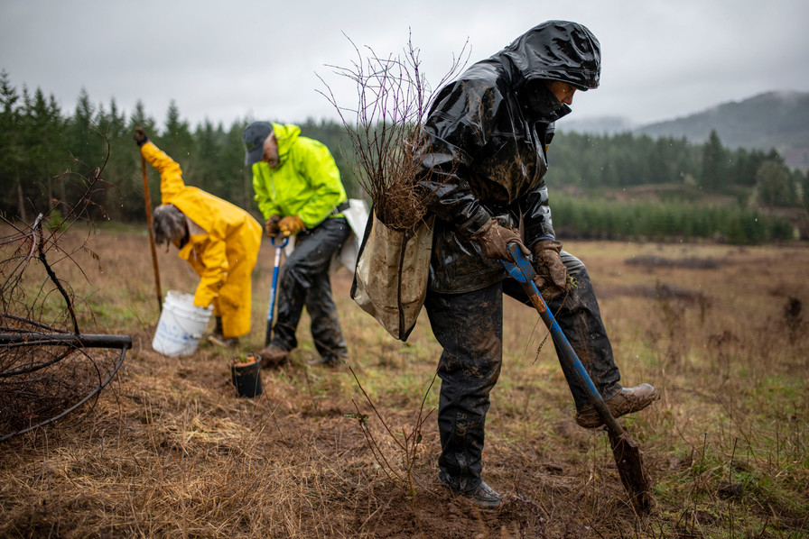 Volunteers came out to Hyla Woods property to help in an oak restoration project. This photo is part of an on-going project about Oregon forests. 2020