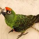 jardines parrot.jpg