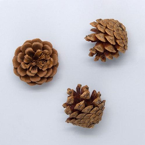 Pinecone, Small