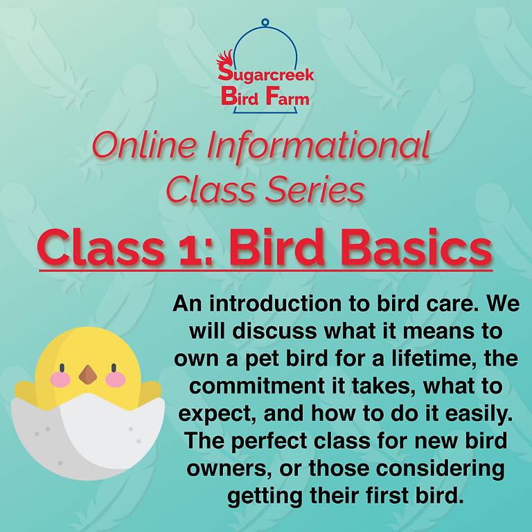 Online Informational Class 1: Bird Basics (8/8/21)