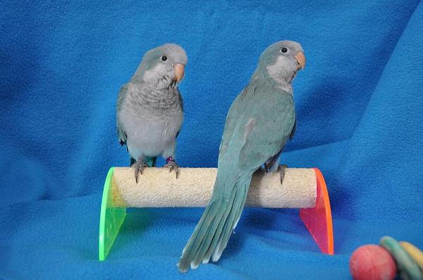 available birds.JPG