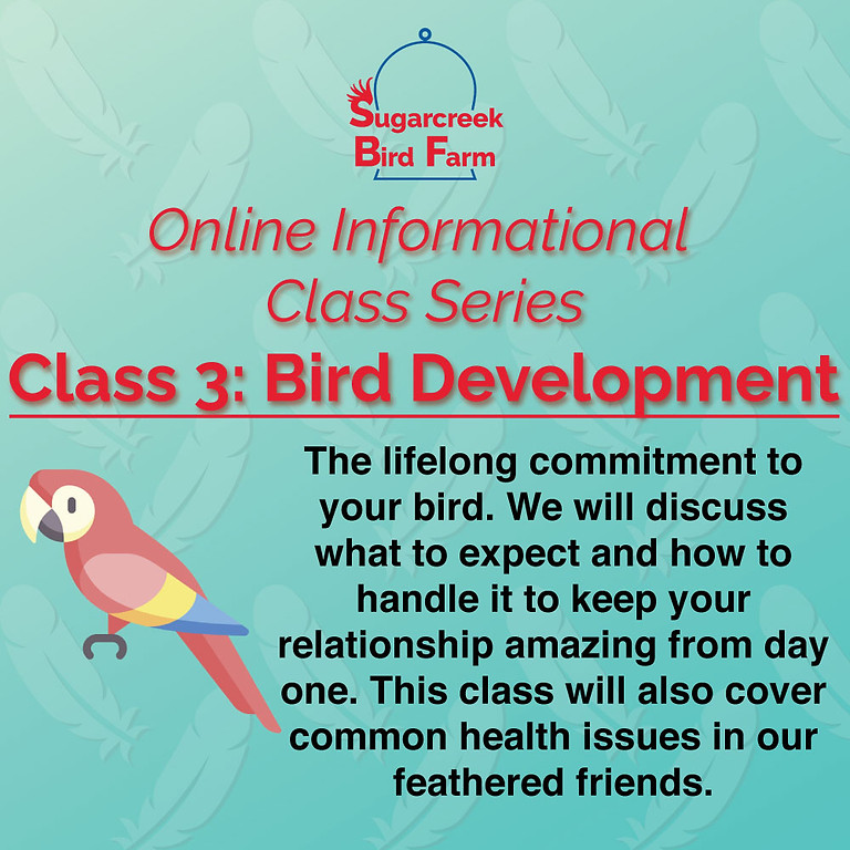 Online Informational Class 3: Bird Development (6/27/21)