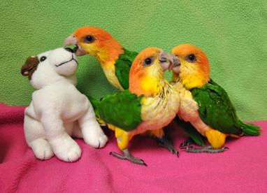 sbf bird farm info gallery 2.JPG