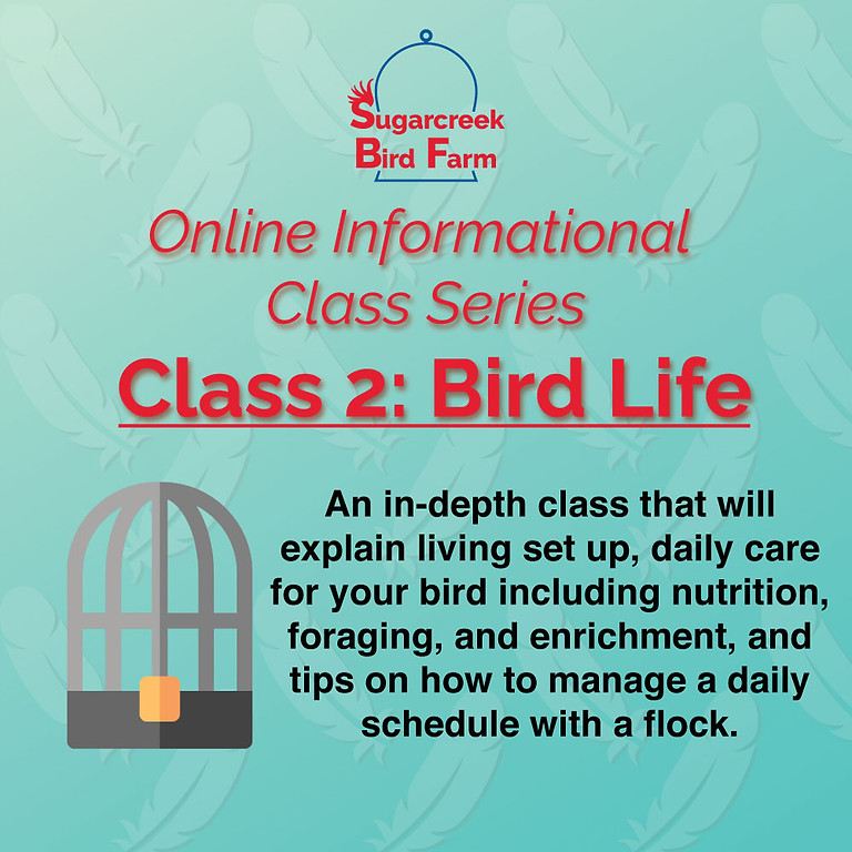 Online Informational Class 2: Bird Life (8/22/21)