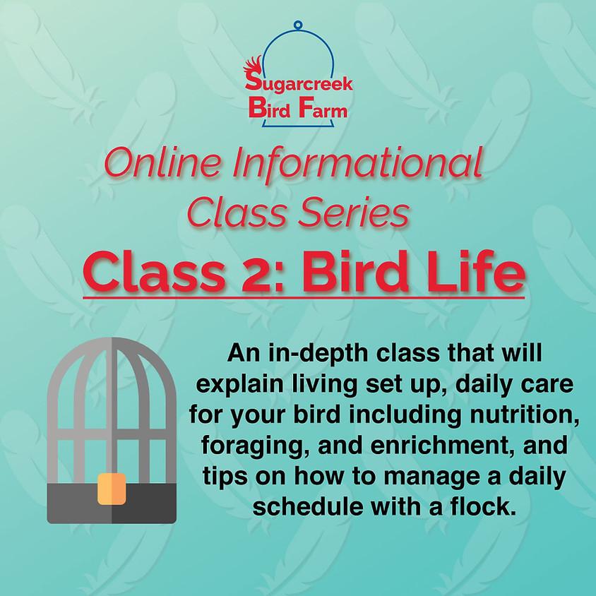 Online Informational Class 2: Bird Life (4/11/21)