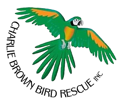 charlie-brown-bird-rescue-fixed-logo.png