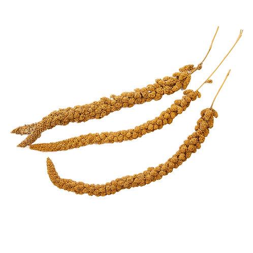 Spray Millet, Per Pound