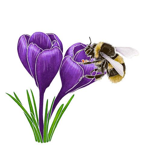 Crocus & Bee print