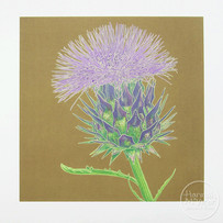 'Cardoon Flower'