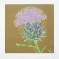 'Cardoon Flower'